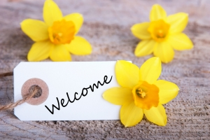 27089195 - a banner with welcome and yellow narcissus in the background